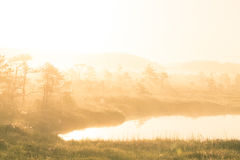 A bright, golden landscape of a marsh after the sunrise. Bright, white light pouring over the scenery. Beautiful swamp in Northern Europe Royalty Free Stock Image