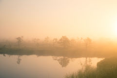 A bright, golden landscape of a marsh after the sunrise. Bright, white light pouring over the scenery. Beautiful swamp in Northern Europe Royalty Free Stock Photos