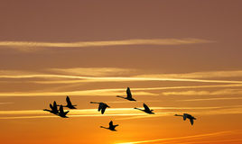 Bright Golden sky on sunset or sunrise with flying birds Royalty Free Stock Photos