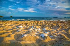 Bright golden sunset on the beach, the waves on the sand, shells. Royalty Free Stock Photography