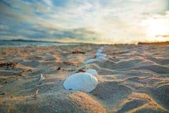 Bright golden sunset on the beach, the waves on the sand, shells. Setting sun Stock Photos