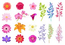 Bright Gorgeous Flowers and Wild Useful Herbs. Open buds and small wild plants. Branches of herbs and aromatic flowers isolated vector illustrations Royalty Free Stock Images
