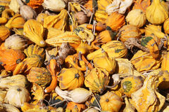 Bright gourds and squashes Stock Photos