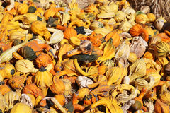 Bright gourds and squashes Stock Photo