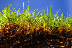 Bright grass. Royalty Free Stock Photography