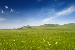 Bright grass Royalty Free Stock Photography