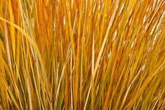 Bright Grass Stock Image