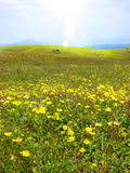Bright Grasslands Royalty Free Stock Photography