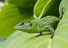 Bright green Royalty Free Stock Image