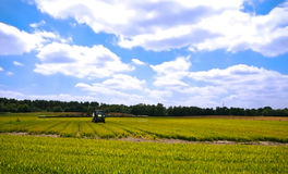 Bright green agriculture farmland Royalty Free Stock Photography