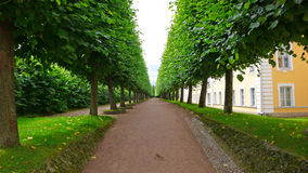 Bright green alley in the park Royalty Free Stock Photo