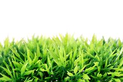 Bright green artificial plastic grass Royalty Free Stock Image