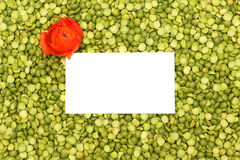 Bright green background of peas with flower Stock Image