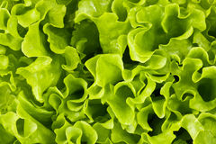 Bright green background, salad Stock Photo