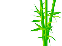 Bright Green Bamboo Stock Photo