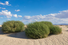 Bright Green Bushes in Desert Stock Photos