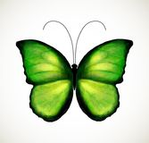 Bright green butterfly. Vector Stock Photo