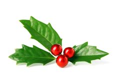 Bright green Christmas holly with red berries Stock Images