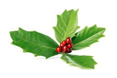 Bright green Christmas holly with red berries isolated. On white stock images