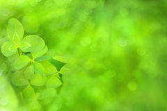Bright green clover blurred background Stock Photography