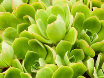 Bright green coastal plants Stock Photos