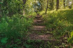 Bright Sunny wooden Stairs in the middle of Forest going Up with trees around royalty free stock photo