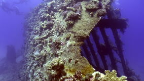 Bright green corals on wreck ship underwater on background landscape in Red sea. Swimming in world of colorful beautiful wildlife of reefs and algae stock video footage
