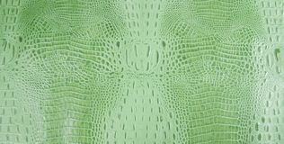 Bright Green Embossed Gator Leather Texture Stock Photos