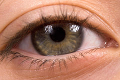Bright green eye with long lashes Royalty Free Stock Photography