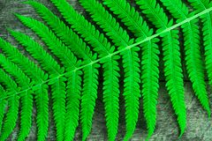 Bright green fern leaf close-up. Decorative background Stock Photos