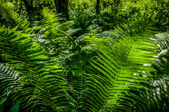 Bright green fern in a sun light as a background, close-up. Stock Photos
