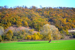 Bright green field autumn forest Stock Image