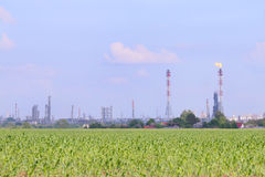 Bright green field with corn and Oil Refinery Royalty Free Stock Images
