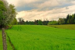Bright green field. In spring Stock Photography