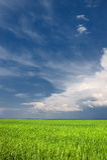 Bright green field with sunny sky Royalty Free Stock Photos
