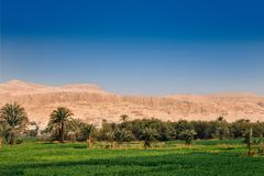 Bright green fields contrast with blue sky and  the dry yellow desert mountains, Egypt. Bright green fields contrast with blue sky and  the dry yellow desert stock photo