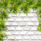 Bright green foliage on background of  brick wall Stock Photo