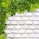 Bright green foliage on background of  brick wall Stock Photos