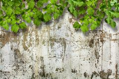Bright green foliage on background  ruined stone wall Royalty Free Stock Photography