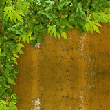 Bright green foliage on background of rusty wall Stock Photography