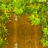 Bright green foliage on background of rusty wall Royalty Free Stock Images