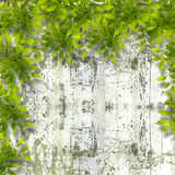 Bright green foliage on background summer stone wall Royalty Free Stock Image