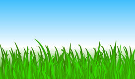 Bright green grass Royalty Free Stock Photography
