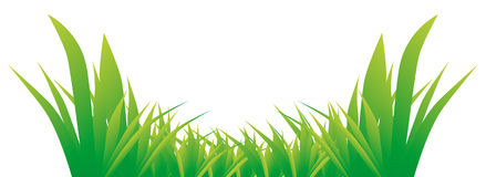 Bright green grass Stock Photos