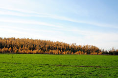 Bright green grass at autumn landscape Royalty Free Stock Photo