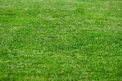 Bright green grass background Royalty Free Stock Image
