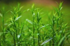Bright green grass on background. With beautiful bokeh Stock Photo