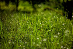 Bright green grass on background with beautiful bokeh Royalty Free Stock Photo