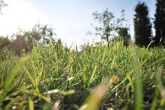 Bright green grass background. Fresh green grass field. Green grass texture for print, web use, posters and banners/Green grass background Stock Photography