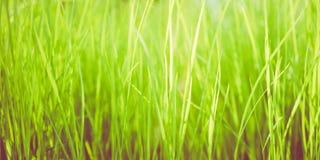 Bright green grass background Stock Photo